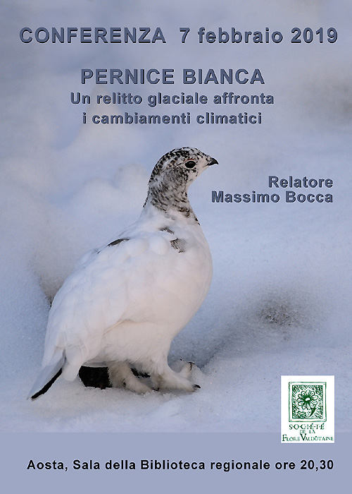 Conferenza - Pernice Bianca